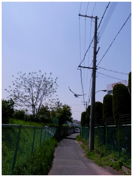 R0016967.JPG